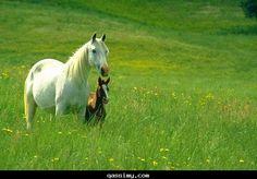 animals white - Cerca con Google