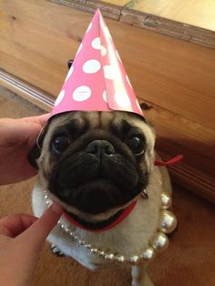 7e3f6bebc55 66 Best Pugs in Hats images
