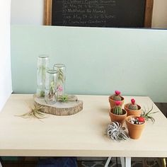 It's wonderful seeing these humble beginnings from our first shoot for our #ModernTerrariumStudio book taken in early 2014. Thinking back to then we were wrapped up in so many emotions daily with such a large project at 24 just a few years out of college: happiness joyful questioning confused tired jumpy but never flustered.  We're so grateful for those trying days and only look back with a smile because that pressure created a book we can't be more prouder of and a business that is more…