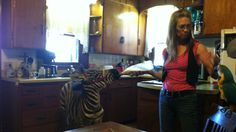 I could have a zebra and a macaw in my kitchen.  No, wait, maybe not.