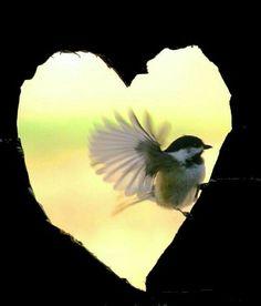 El amor hasta en la naturaleza