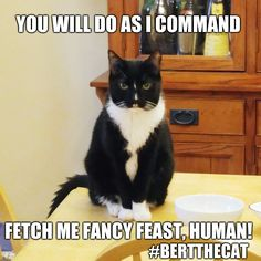 You will do as I command    YOU WILL DO AS I COMMAND #BERTTHECAT FETCH ME FANCY FEAST, HUMAN!   image tagged in bert the cat,mind control,funny,cat memes,feed me,fancy feast   made w/ Imgflip meme maker