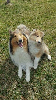 My puppy meets Girlfriend's doggo! http://ift.tt/2dI278R
