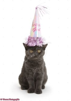 Grey Kitten Party Hats Cats And Kittens Gray