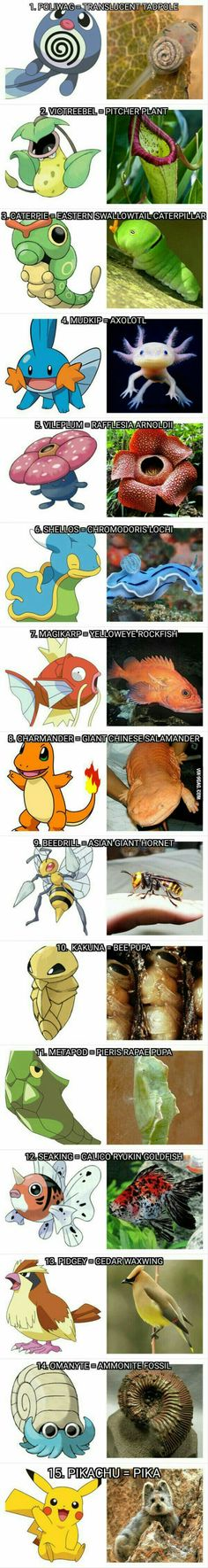The real animals pokemon are based on