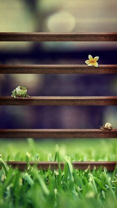 !!TAP AND GET THE FREE APP! Shelves Homescreens Nature Frog Green Blurred Grass HD iPhone 5 Wallpaper