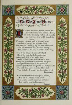 The Floral gift : an illuminated souvenir