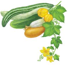 All About Growing Cucumbers Learn how to plant cucumbers, which cucumber types grow best in your region, and get great pickle and gazpacho ...