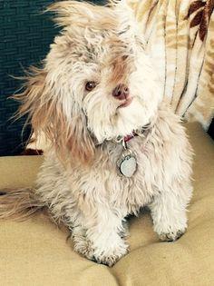 Harriet Harsip - 2017 Dog Calendar Submission