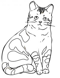 Viewing Gallery For Realistic Cat Coloring Page 48601