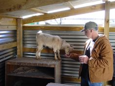 The Things My Nigerian Dwarf Dairy Goats Have Taught Me. If you are considering raising goats, here are some first hand lessons learned.
