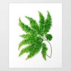 Antique Fern Print No.5 Green Nature Botanical Art Art Print by GnosisPictureArchive - $20.80