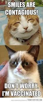 Grumpy cat quotes are funny to read. Tardar Sauce also known as the Grumpy cat is a celebrity and queen of cats. We have collected a list of amazingly funny and Humor Animal, Funny Animal Memes, Cute Funny Animals, Funny Animal Pictures, Funny Cute, Funny Pics, Funny Stuff, Funny Images, Cat Stuff