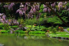 Japanese Gardens in Seattle
