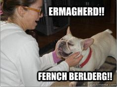 9 Ways To Know You're A French Bulldog Owner