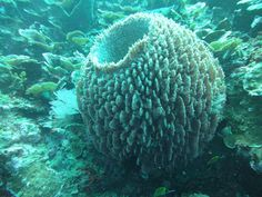 koralen - Google zoeken