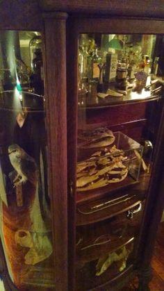 Curio cabinet odditys