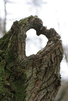 Nature may be the best architect of all ❤Nature may be the best architect of all ❤ I Love Heart, With All My Heart, Happy Heart, Lonely Heart, Heart In Nature, Heart Art, Dame Nature, Belleza Natural, Belle Photo