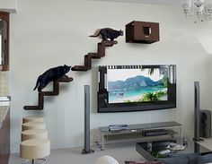 Spectacular Modern Cat Furniture from Brazil