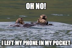 Caption Contest Winners: What are These Otters Saying? : TreeHugger