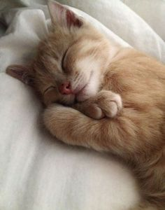 (notitle) - Adorable Cats and Cute Kittens - Katzen Cute Animals Images, Cute Baby Animals, Animals Kissing, Sleepy Animals, Cutest Animals, Cute Kittens, Fluffy Kittens, Fluffy Cat, I Love Cats