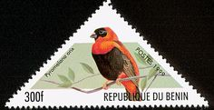 Southern Red Bishop stamps - mainly images - gallery format