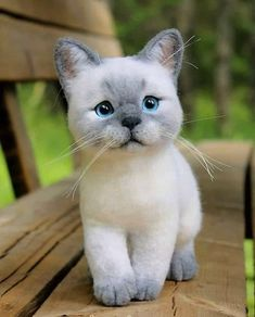 The Simple Guide of Feeding Kittens Funny Animal Memes, Funny Animal Videos, Funny Animal Pictures, Funny Animals, Cute Animals, Kittens And Puppies, Cute Kittens, Baby Kittens, Cats And Kittens