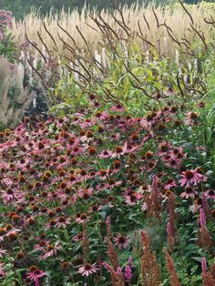flowering border with echinacea Millennium Garden at Pensthorpe Wildfowl Reserve, Norfolk, UK. - 15th September, 2008