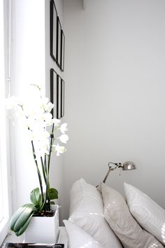 pretty white orchid and linen cushions = homevialaura
