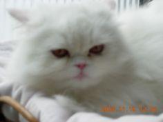 Pregnant mom Kimi. Lizzie cat.