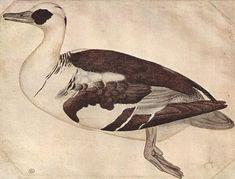 Pisanello, 1430s