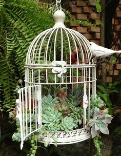 Δημιουργήστε φυτο-συνθέσεις μέσα σε οικονομικά κλουβιά που υπάρχουν στο εμπόριο.