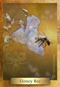 The Bee is found world-wide in mythology, some of the oldest bee goddesses date back 10,000 years. In Ancient Near East & Aegean cultures Bees were the sacred insect bridging the natural world and the underworld. The Mayans worshipped the Bee God and Egyptian temples depicted bees prominently * One of the 48 cards in the EcoHeartOracle.com - this is a brief description and not the complete oracle meaning.