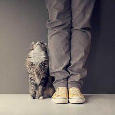 10 sinais que dizem que o seu gato ama você | Ronronar