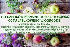 zdrowie.hotto_.pl-zastosowanie-octu-jablkowego-12-przepisow-pulapka-na-muchy.jpg (790×526)