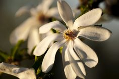 flower Flowers, Plants, Plant, Royal Icing Flowers, Flower, Florals, Floral, Planets, Blossoms