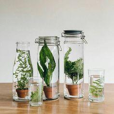 On cherchait des plantes qui ne demandaient pas trop d'entretien : des plantes aquatiques