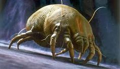 Nasty Critters in your makeup, Dust Mite