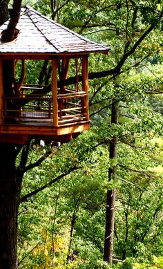 Beautiful, lofty treehouse
