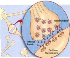 O que são Sinapses. Em um reflexo neuronal, a informação se transfere da célula pré-sináptica para a célula pós-sináptica. As células pós-sinápticas podem ser neurônios ou não. via @minenfermagem