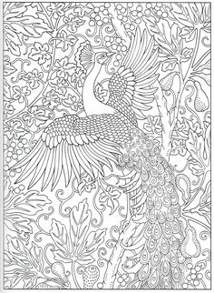 Peacock coloring page 15/31