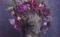 Após campanha de conscientização, 140 pit bulls abandonados são adotados
