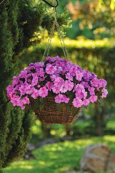 Beautiful Flowers Pictures, Beautiful Flower Arrangements, Pretty Flowers, Hanging Flower Baskets, Hanging Plants, Garden Design Plans, Flowers Nature, Flower Pots, Hanging Flowers
