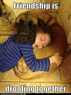 Mastiff napping with a kid.