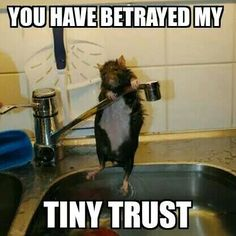 You have betrayed my tiny trust!