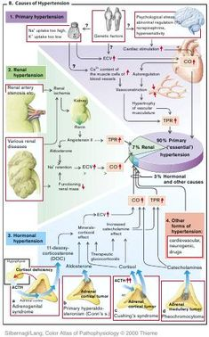 PATHOPHYSIOLOGY OF CARDIOVASCULAR SYSTEM (great heart failure diagrams)