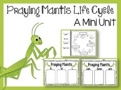 This mini unit is all about Praying Mantis . It includes anchor charts, sequencing cards, and response sheets.Life CycleKWL ChartsCan/Have/AreDo You Like Praying Mantis ? Yes/No