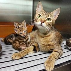 Cat Mama Partially Paralyzed Continues to Give Her Babies Unconditional Love