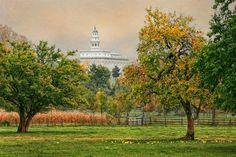 Nauvoo Apple Tree by Robert Boyd.  I love this.