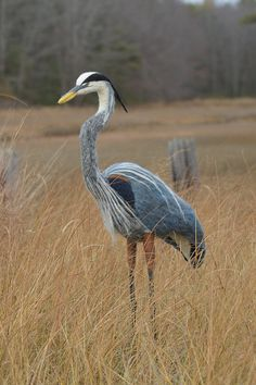 Great Blue Heron lifesize needle felted by WildThingsMaine on Etsy